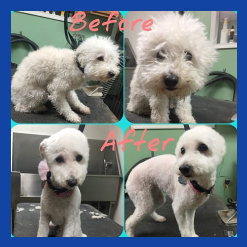 Before & After Dog Grooming in Easton, PA